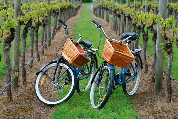 Tour_De_Vines_cycling_wine_Clare_valley_tour_1.jpg