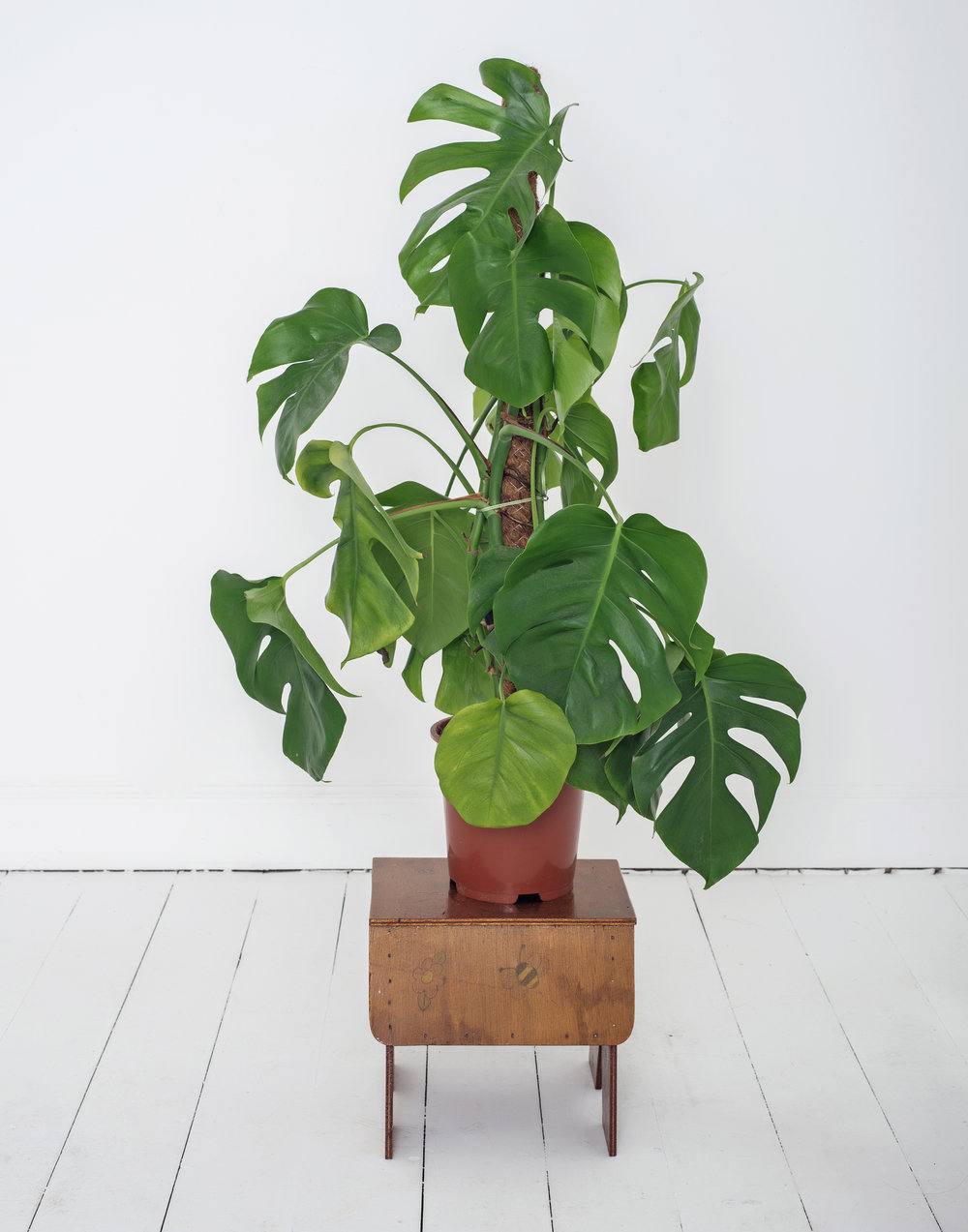 Plant on a wooden desk