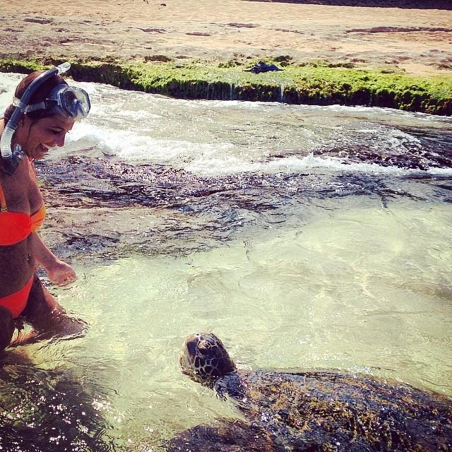 Turtles on Oahu Island - Hawaii