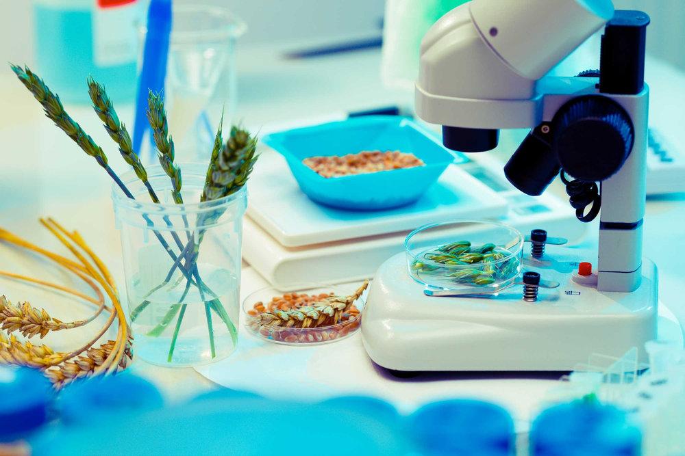 Voeding en genexpressie : Het effect van voeding op gezondheid
