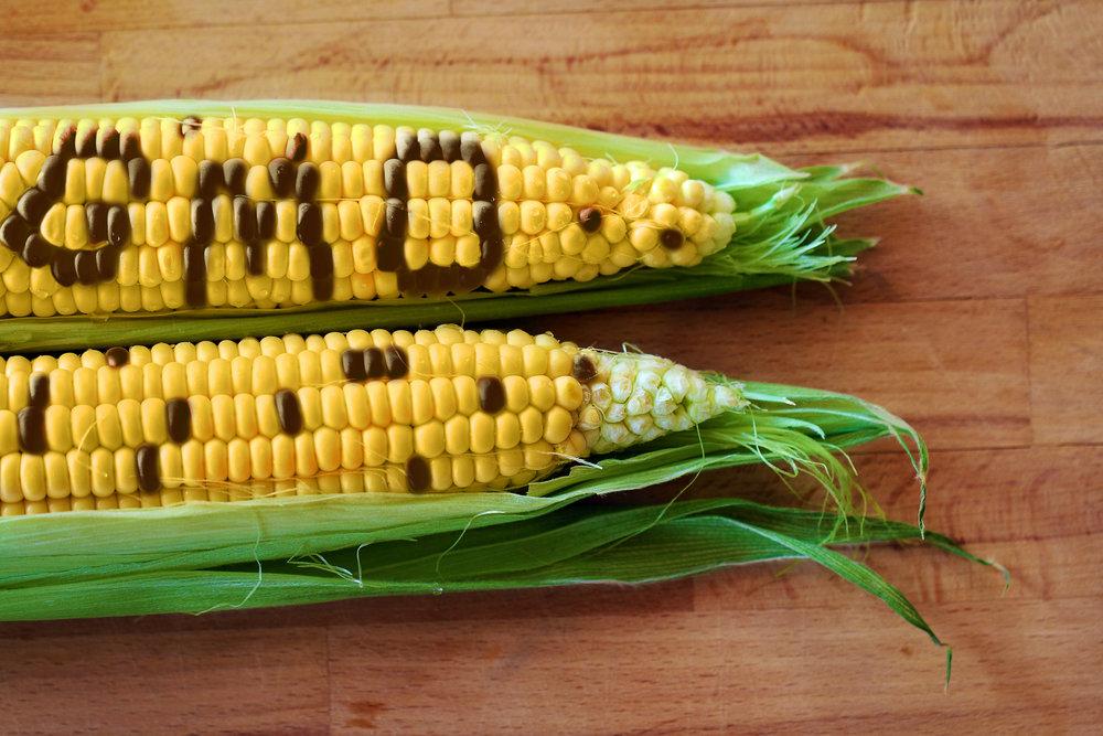 Gevolgen uitspraak Hof van Justitie over  Genetisch Gemodificeerde Organismen  voor de Europese voedingsmiddelensector.