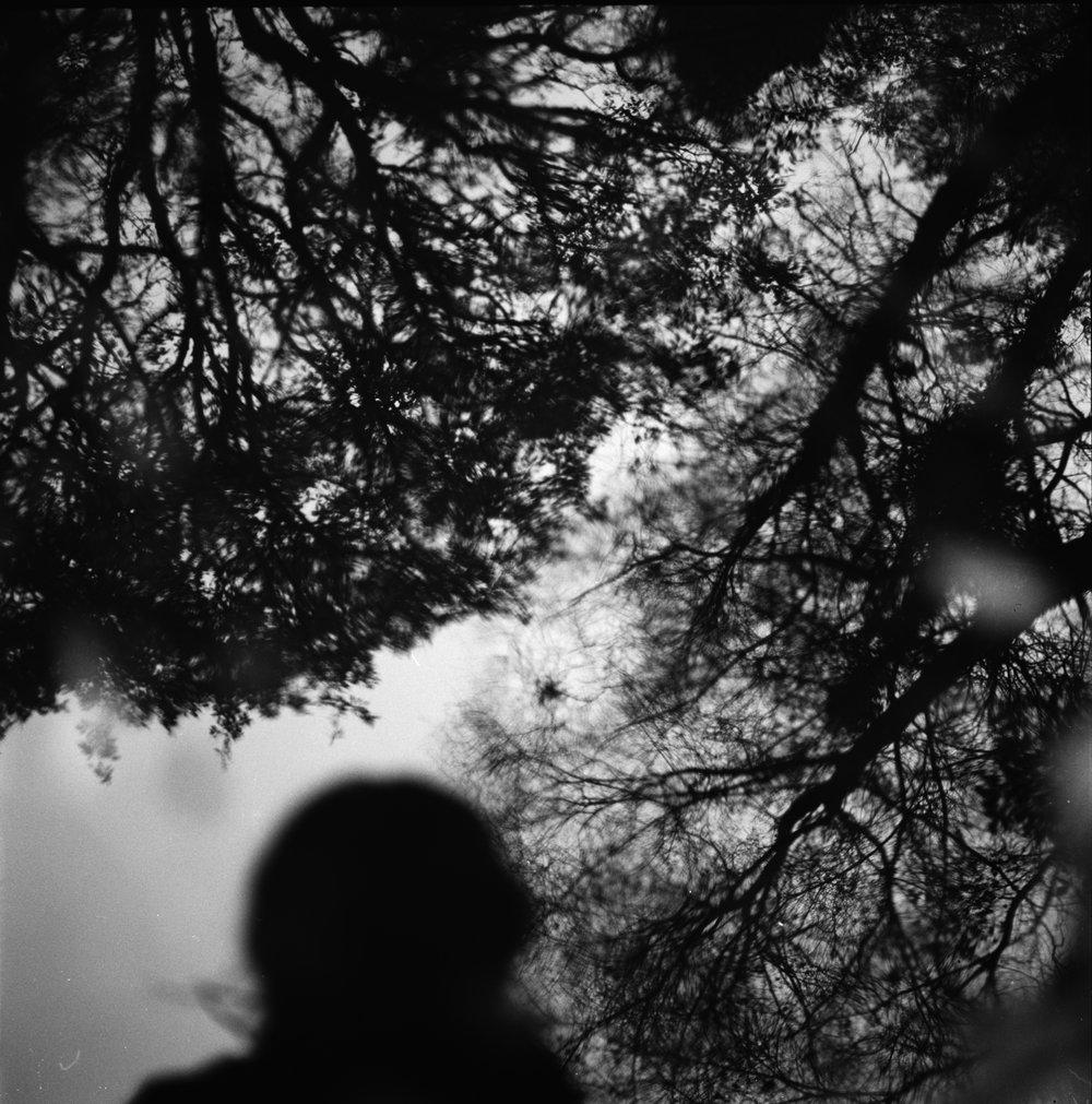 tree series.jpg
