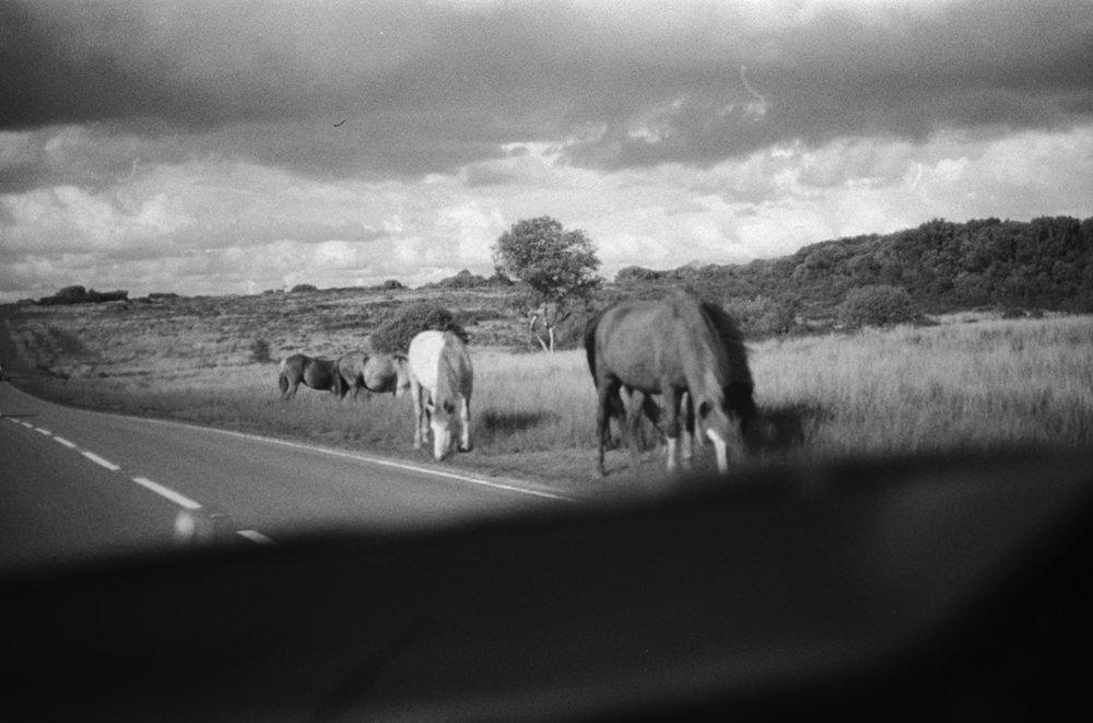 Wild Horses - Samana