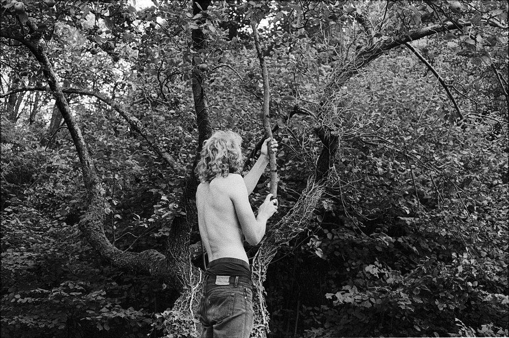 Samana, Apple Orchard