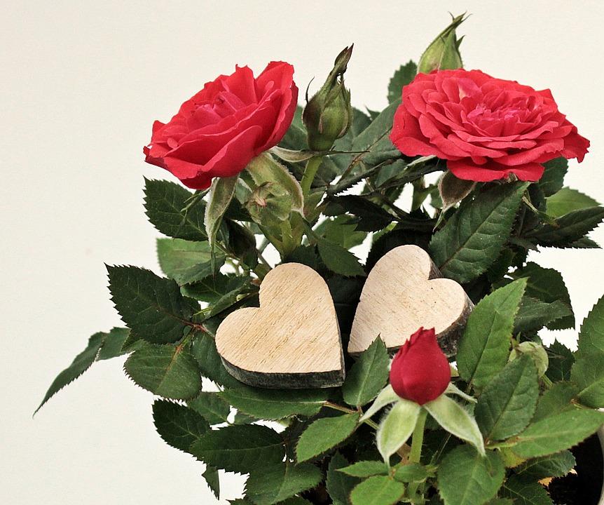 ....   Wer dankbar ist, gewinnt Lebensfreude   ..   Gratitude is a seed from which joy springs    ....