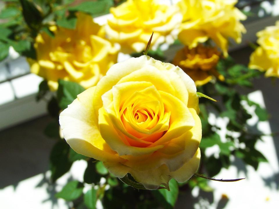 Nicht jede Blüte kann gleich viel Sonnenlicht erhalten