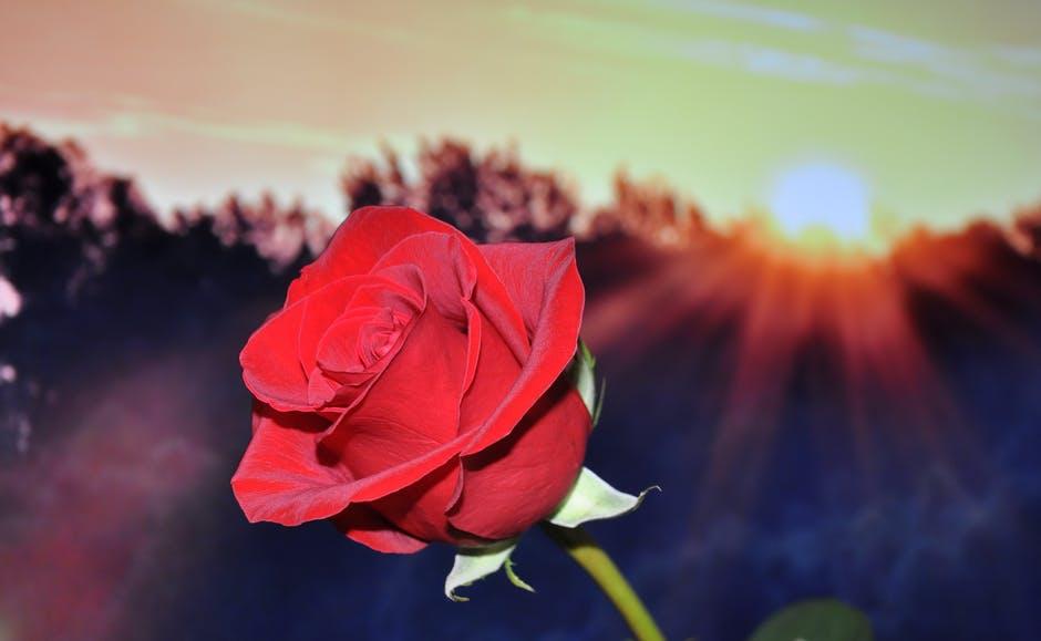 Vom Geliebten Blumen zu erhalten erwärmt das Herz der Liebe ...