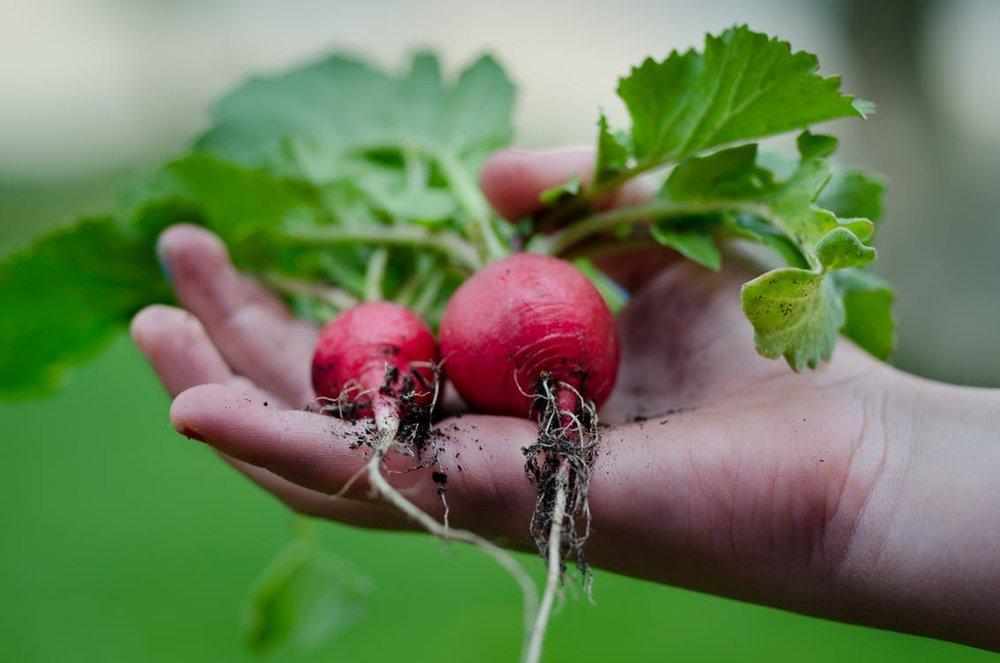 Was für eine Belohnung, wenn man nach seinem Einsatz die Früchte ernten kann. Ein Garten lädt jedesmal zu einer Naturbetrachtung ein, wo tiefe Werte kommuniziert werden.