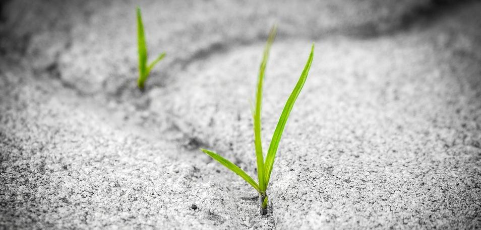 ....  Alles, was benötigt wird, um Unkräuter wachsen zu lassen, ist ein kleiner Riss auf dem Bürgersteig. Und manchmal braucht es nicht einmal einen Riss ! Lassen wir es nicht zu, dass einer folgenden Themen als Unkraut wachsen kann.  ..  All a weed needs to grow is a small crack in the sidewalk. Sometimes not even that! Let's not allow the following irritants to grow like weeds.  ....