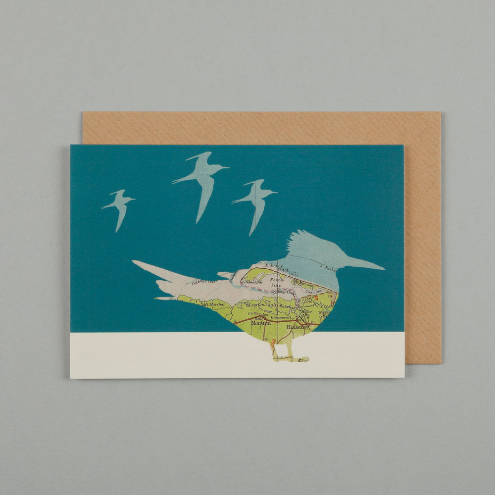 TERNS, TEAL