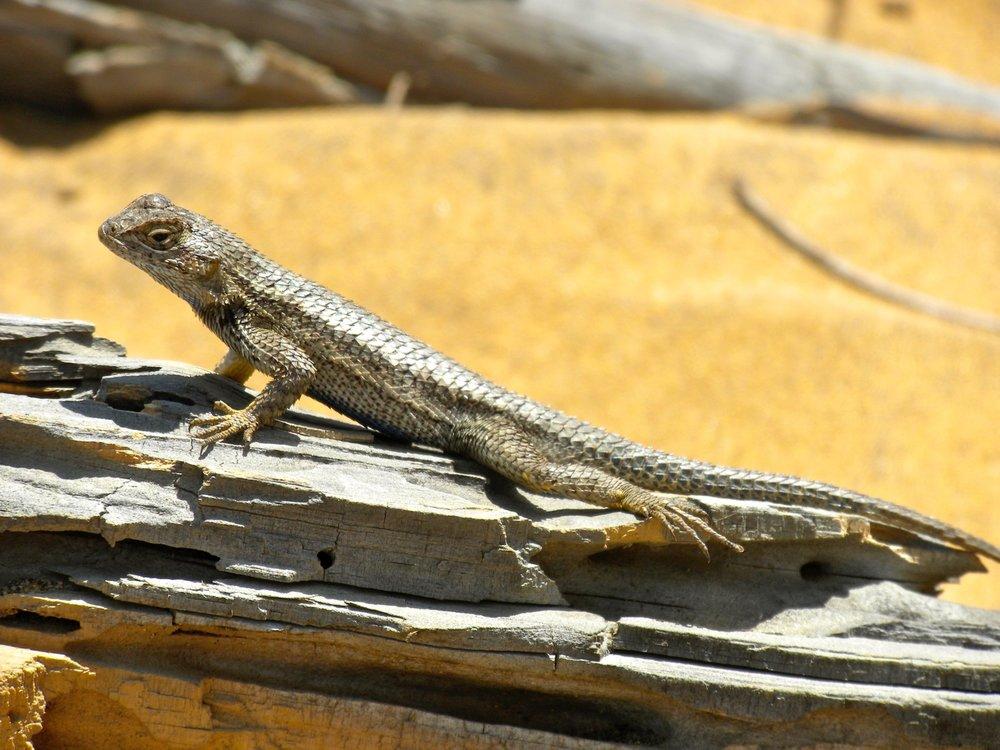 Torrey Pines State Reserve 2010 5.jpg