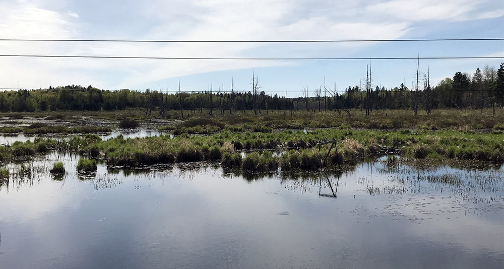 Lake Sharbot - Drive - Canadian Shield - marshes