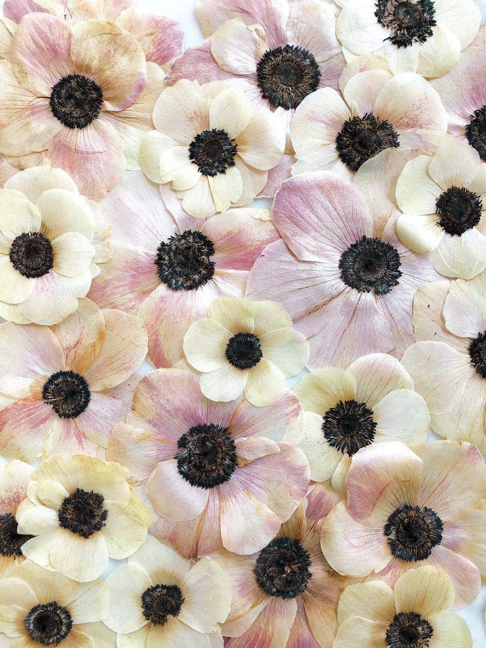 Framed Florals - Preservation Information...