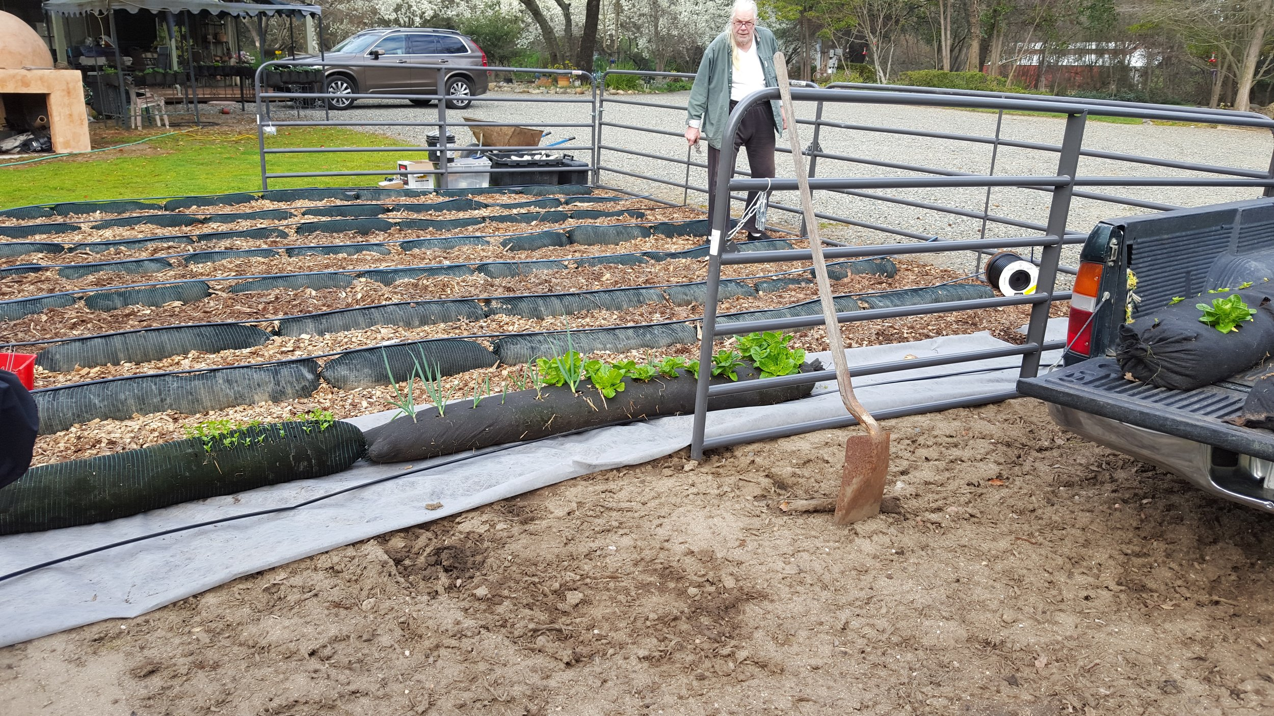 Planting several vegetables with the azolla compost.