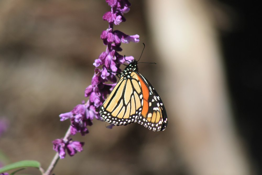 butterfly-2299982_1920.jpg