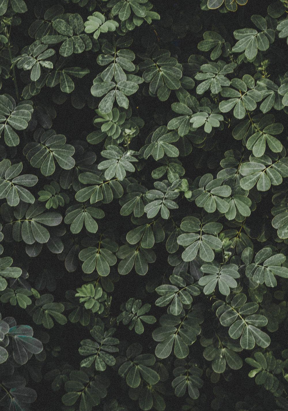 plant--2.JPG