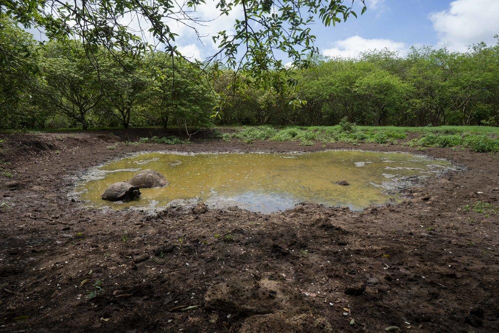 El Chato Reserve - Santa Cruz, Galapagos