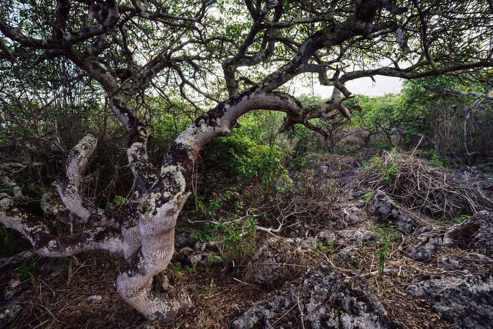 The strange, dry habitat that is the home of Giant tortoises