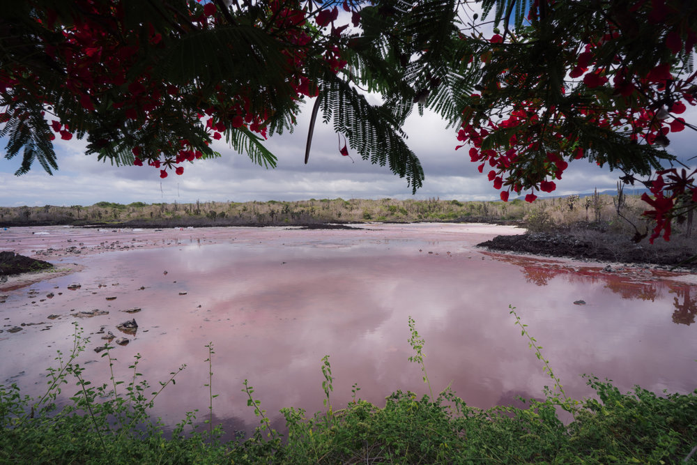 One of the pink salt lakes on the way to Las Grietas