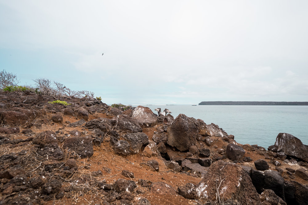 The dry habitat of the island with a Blue-footed booby looking tiny in the background