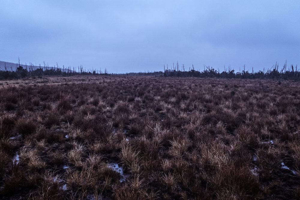 Peat bogs around the Piramide refuge