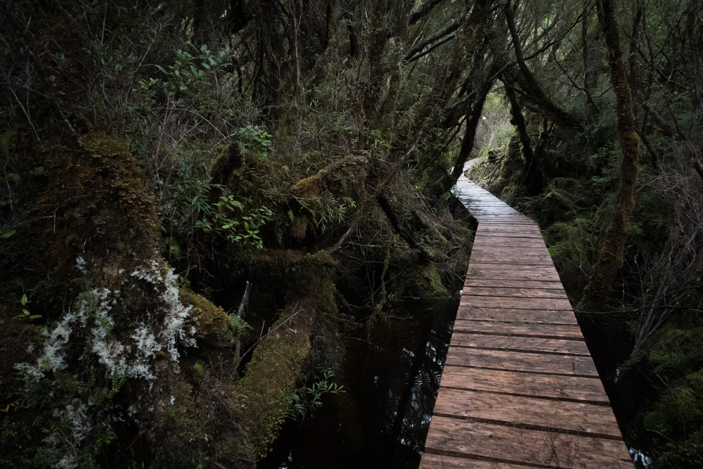 Boardwalk through a dark section of the forest