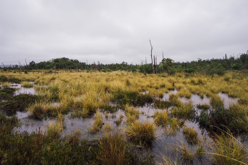 The two dominant ecosystems on the Transversal Trail: the peat bogs...