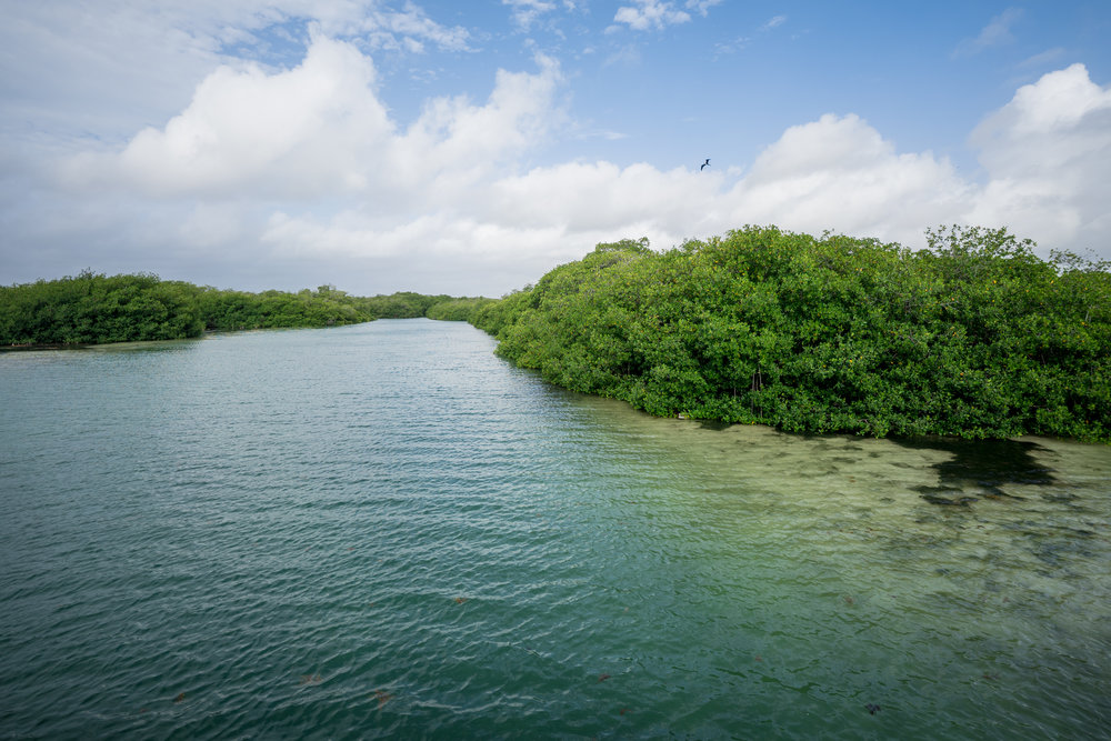 - Mangroves in the Sian Ka'an Biosphere Reserve, where crocodiles and manatees can be seen.