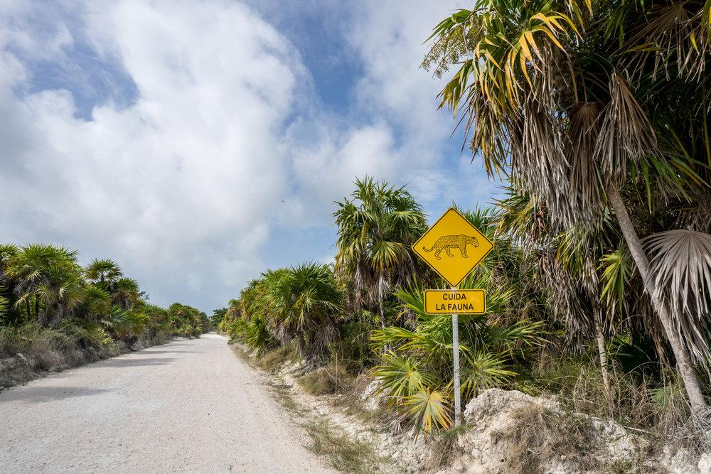 """""""Jaguars crossing"""" sign"""