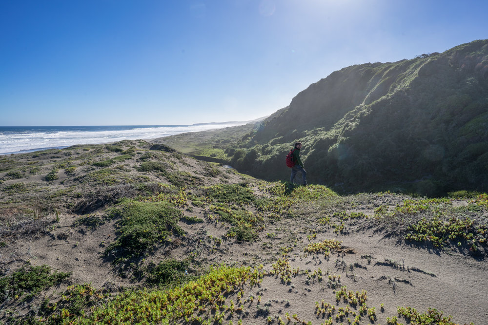 - Reaching the dunes in Colún brought us to the place where the evergreen forests that have survived the destruction meet the ocean.