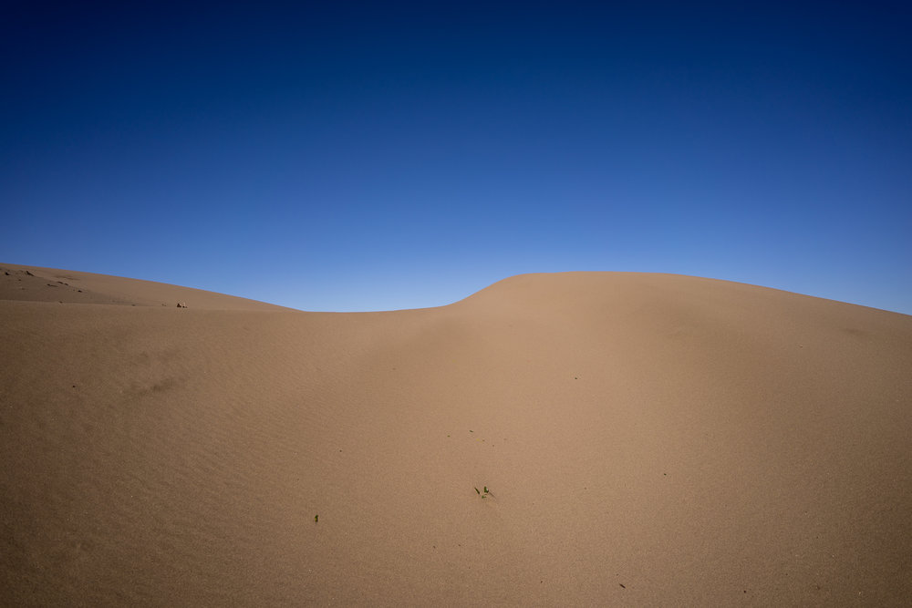 - Almost at the top of one of the dunes. On the other side, the sand is slowly advancing into the evergreen forest.