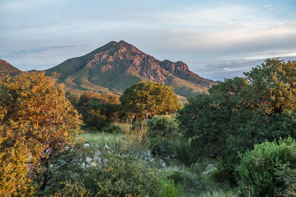 drippring springs area in the organ mountains - New Mexico's Organ Mountains. This beautiful mountain range, visible from anywhere in the city of Las Cruces, offers camping and hiking opportunities, and is easily accessible.