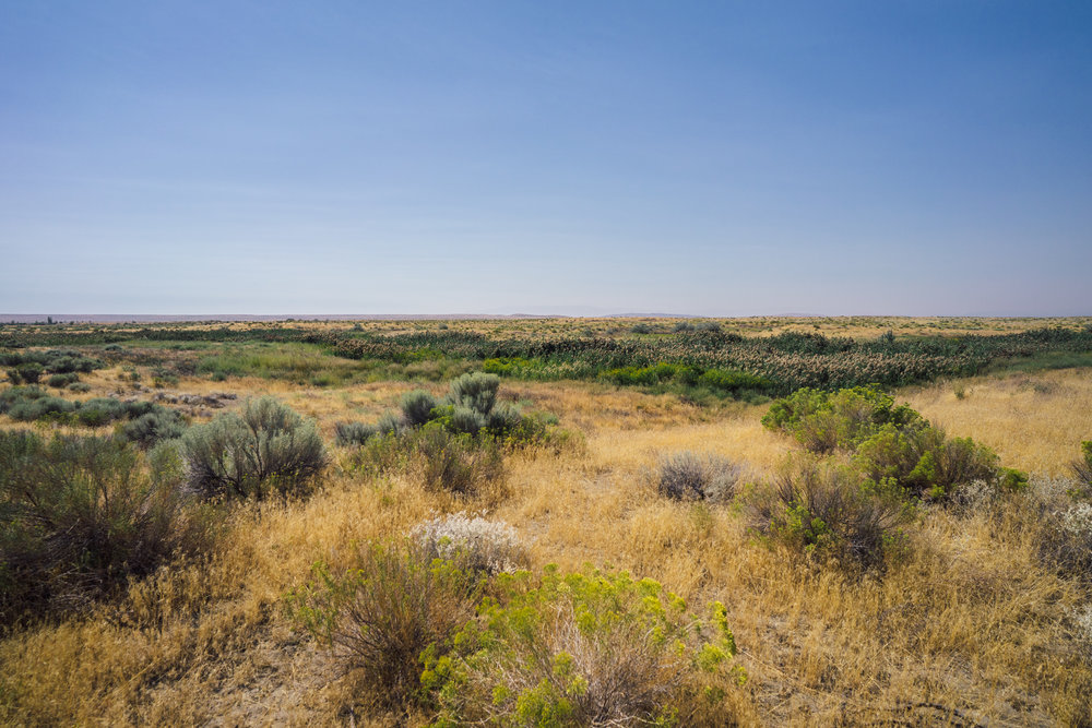 - A sample of the grasslands covering most of the national monument. It's these kinds of ecosystems that have been commonly disregarded for conservation and have been covered by ranch and farmlands, as well as urban developments. However, they host an incredible biodiversity of reptiles, mammals and plant life.