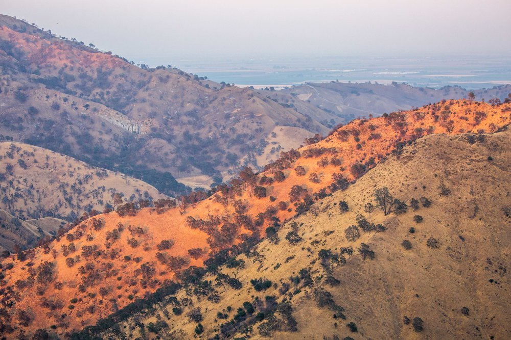 - The arid mountains surrounding the southern portion of the national monument are partially covered by interior live oaks (Quercus wislizeni) that have survived extensive wildfires.