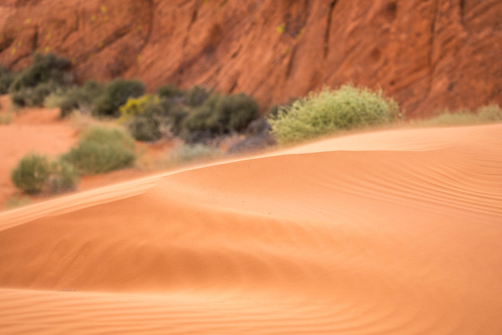 Mud Wash dunes - The dunes, sculpted and moved around by the wind, are one of the most impressive sights in a national monument where one constanly runs out of words to express awe.