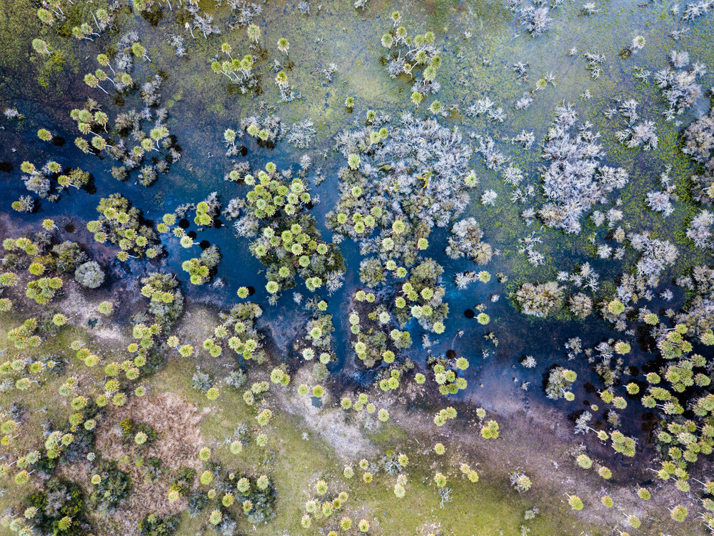- Seen from above, the surreal beauty of Iberá reveals a wild landscape of one of the largest wetland ecosystems in the world. Thanks to protections from the government, to the growing consciousness of local communities and to the work done by CLT Argentina, it is also one of the healthiest.