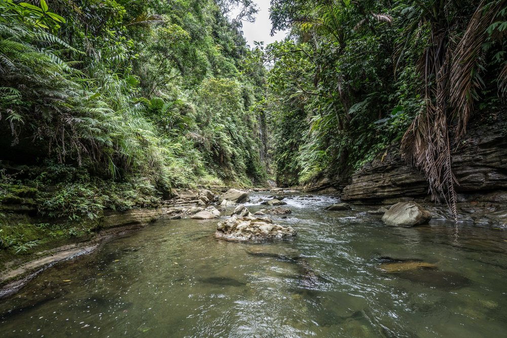 Upper navua conservation area - The rainforest inland is lush and beautiful, with rivers and waterfalls that carve gorges in the mountains. Taking at least a day off from the beach and heading inland promises plenty of beautiful sights and adventures.