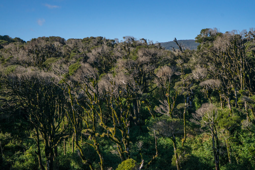 - Native Valdivian temperate forests