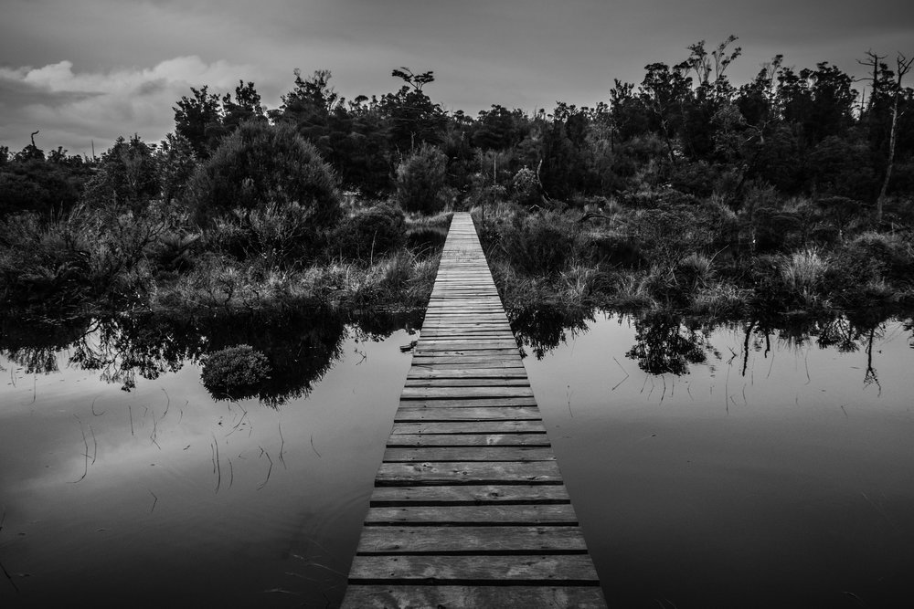 One of the boardwalks across peat bogs in Tantauco Park, on the Island of Chiloé
