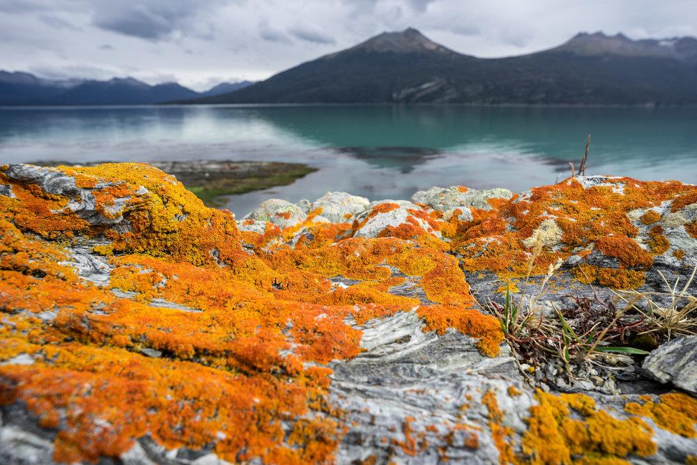 Lichens covering the rocks in Yendegaia Bay, part of the Cape Horn Biosphere Reserve and the Yendegaia National Park