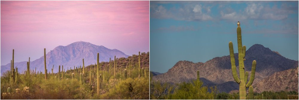 - Left: Ironwood Forest National Monument, AZ. Saguaro cacti at sunset. Right: Sonoran Desert National Monument, AZ: A red-tailed hawk welcomes us on top of a saguaro at the entrance in the national monument. Both monuments protect some of the best preserved portions of the Sonoran Desert ecosystem and are located wihin an hour drive from cities like Phoenix and Tucson.