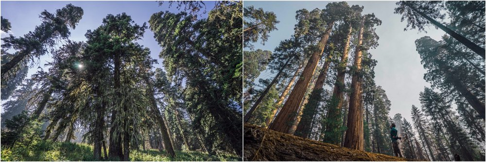 - Left: Cascade — Siskiyou National Monument, OR. This is the first and only national monument protected solely for its unique biodiversity. Located at the convergence of three distinct mountain ranges and hosting one of the most special ecosystems in the country, it should not be on the list of monuments to be reduced in size. Right: Giant Sequoia National Monument, CA. If you're looking to be reminded of gratitude for living on planet Earth, a visit to this national monument will fill you up with a sense of awe that will take you back to your childhood days.