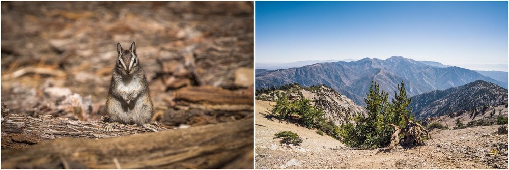 - Left: A chipmunk is inspecting us on the trail to the Baden-Powell peak. Right: Top views in the San Gabriel Mountains National Monument