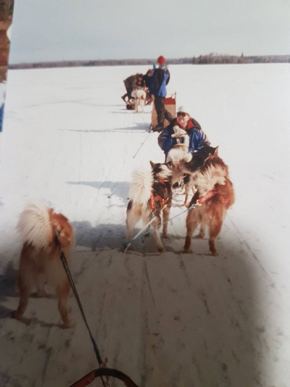 """Australian Mawson Huskies that I ran in Minnesota in 1998."""