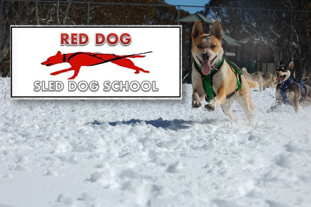 RedDogSledDogLogo.jpg