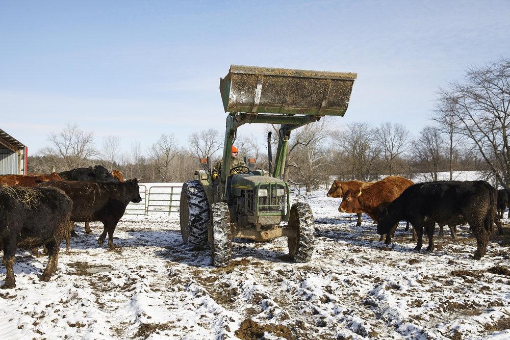 Blues Creek Farm