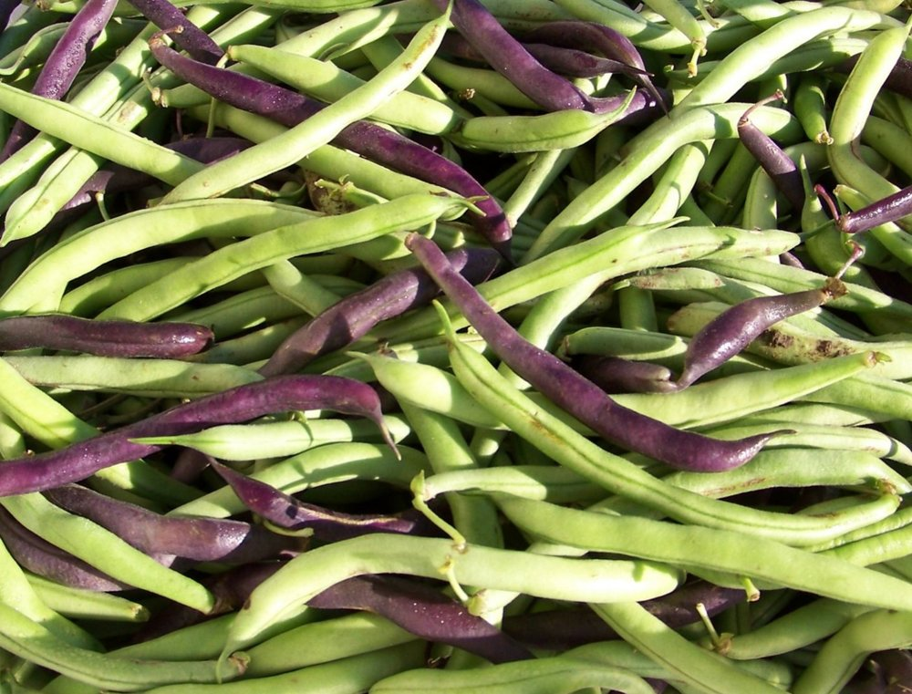Combination of green and purple beans.