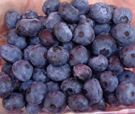 blueberries [Chautauqua Hills Farm, Longton]