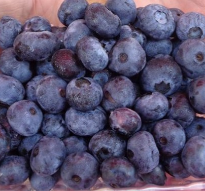 blueberries b.jpg