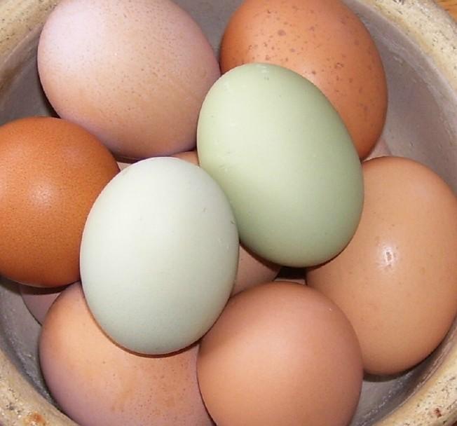 eggs b.jpg